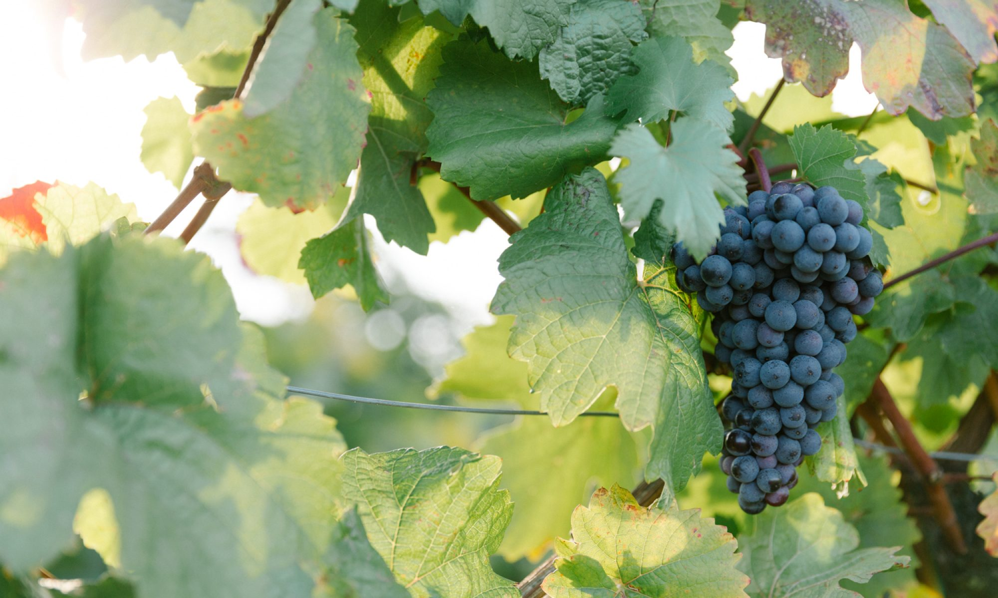 Weingut Strobl